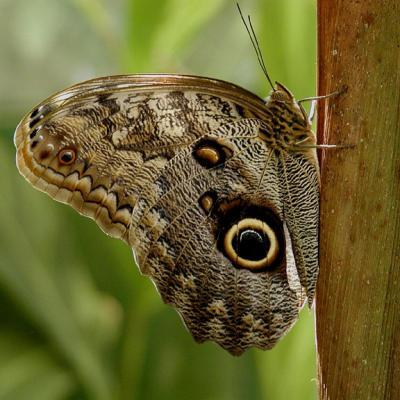 San Diego Wild Animal Park Butterfly Days