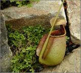 Vase on the Rocks