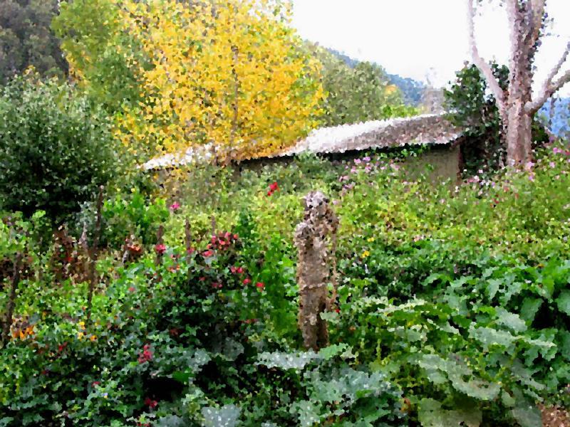 Cottage garden.jpg