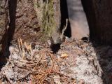 Dsc01714.jpg here lizard lizard lizard