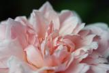 in_my_garden