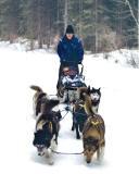 dog sled edited.JPG
