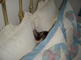 nemie in bed original.JPG
