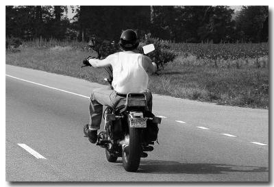 Jersey Biker