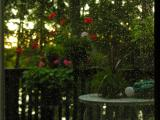 this is the same shot focues, rain on window, geraniusm