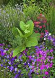 spring-ledge-farm-flowers-0.jpg