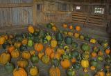Pumpkins in Bouldervale Barn