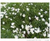 Wild flowers?