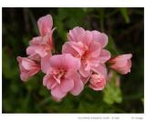 Spring flowers V