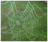Natural Web. Hunter not at home