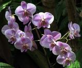 Orchids - Loro Park