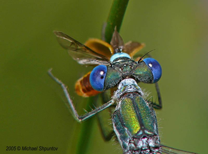 Micky Blue Eyes