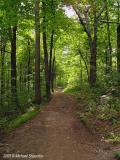 Trail in Parc Mont Royal