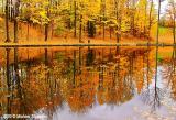 Reflection - Glen Haffy Conservation Area