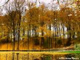 Upside Down Trees - Glen Haffy Conservation Area