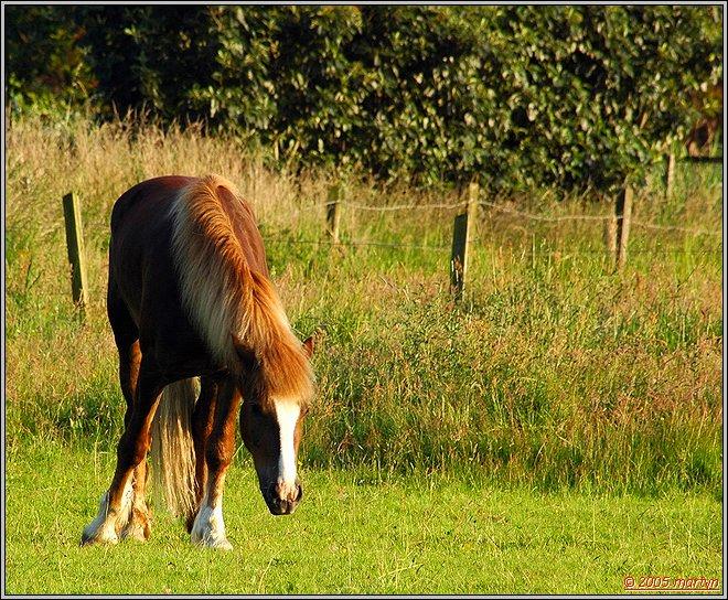 DSC_0079 Horse 1.jpg