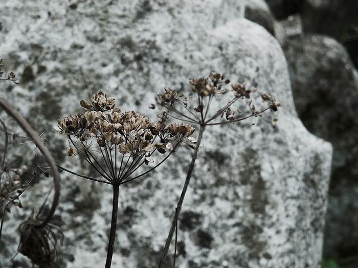 ballintray graveyard 2 - co. waterford