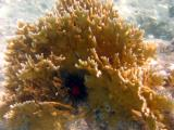 Snorkeling at Salt Pond - coral