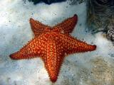 Snorkeling at Waterlemon - Sea Star