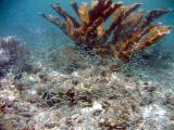 Snorkeling at Waterlemon - Elkhorn Coral