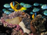Clownfish and friends