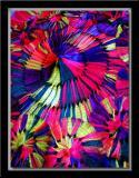 DSCF2169 copy.jpg