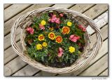Basket of flowers  on our back deck