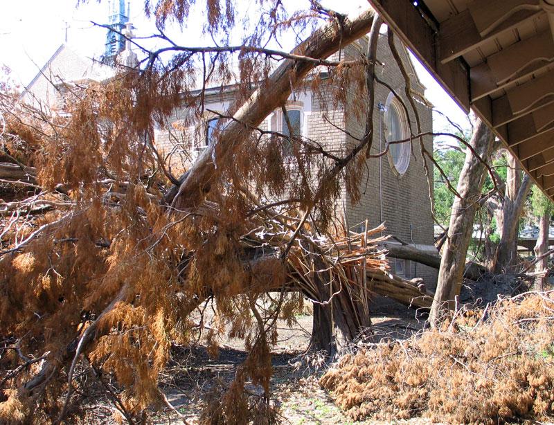 Cedars Behind Mausoleum