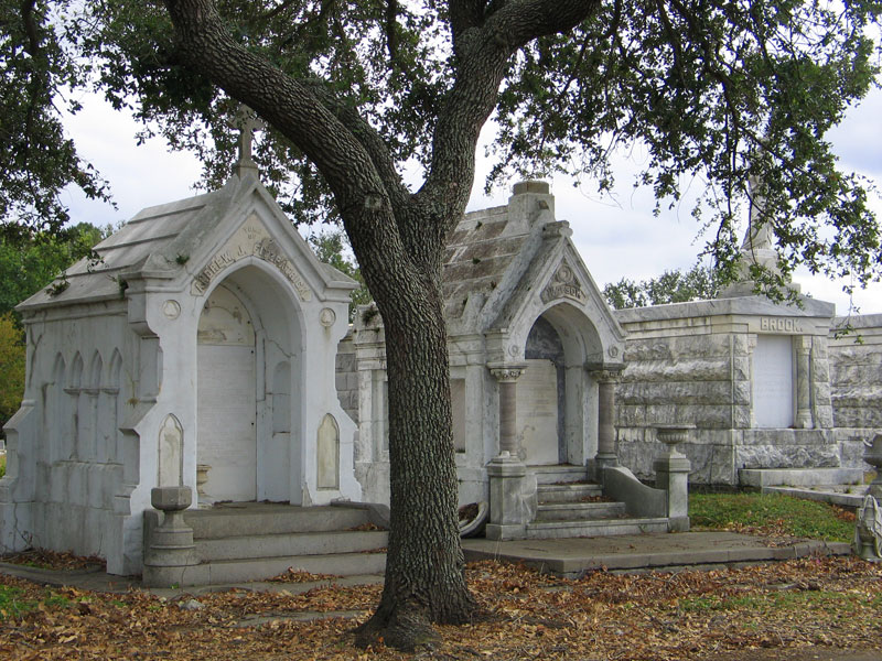 A young live oak graces these tombs
