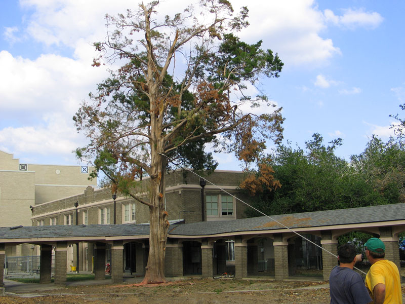 Removing last tree in Sacred Heart Courtyard-November 3