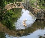 Swans under bridge_Aug. 9
