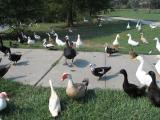 Bewildered Birds