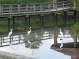 September 16_Hurricane Katrina aftermath
