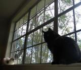 Abraham and Sadie on Window Sill