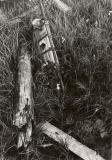 Alongwoods