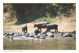 At the Hippo Pools