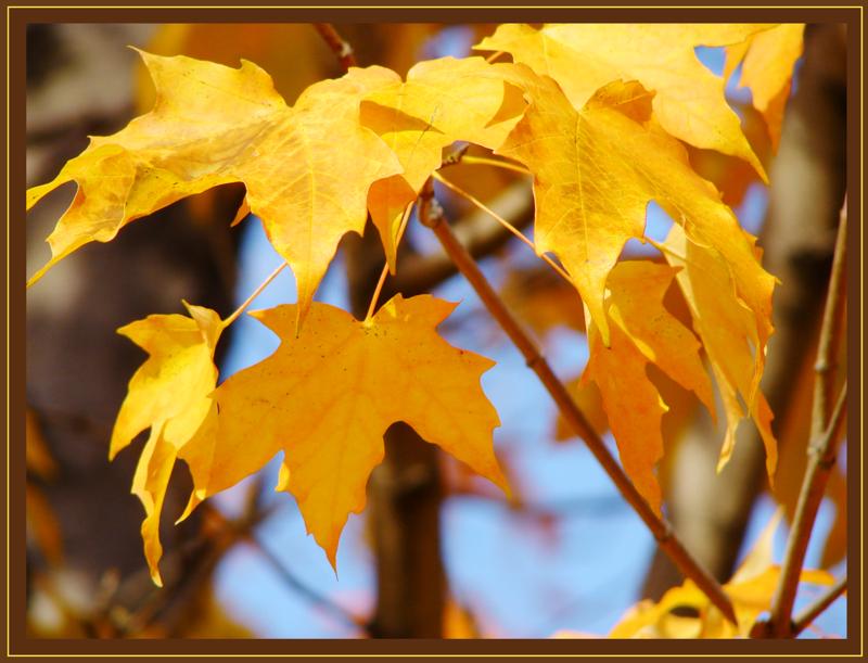 24 karat leaves<br>by parietalpenguin