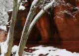 Winter Maples, Oak Creek Canyon