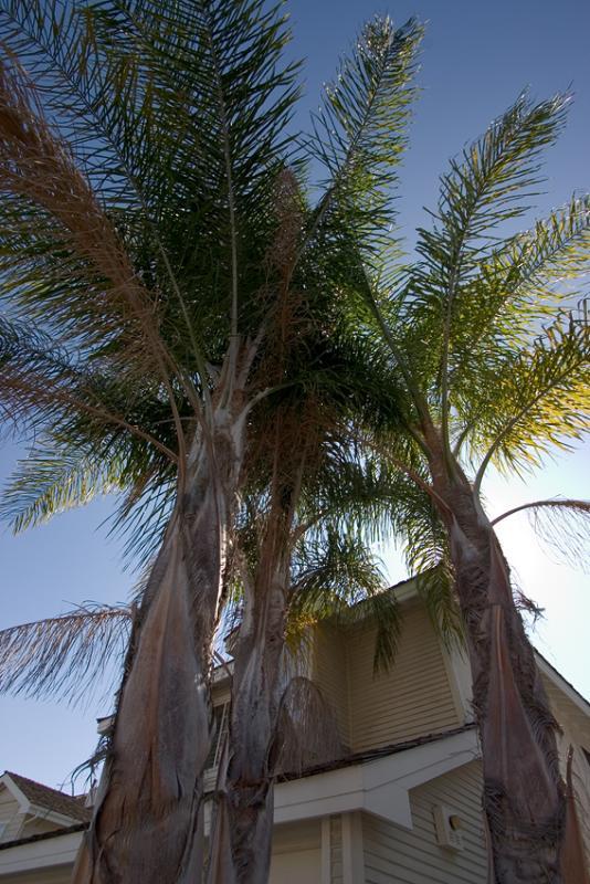 Palms in Sun