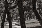 6/1: Boring Trees