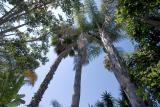 Sky of Palms