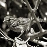 Duotone Birdie