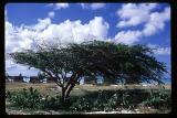 windtree.jpg