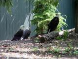 busch gardens williamsburg (june 2005)
