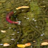 fish_2387.jpg