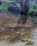 fish_2793.jpg