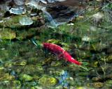 fish_2871.jpg