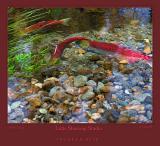 FishBite_1934.jpg