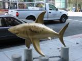 Sundial Shark