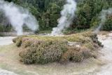 Natural volcanic steam boilers - Furnas, S.Miguel